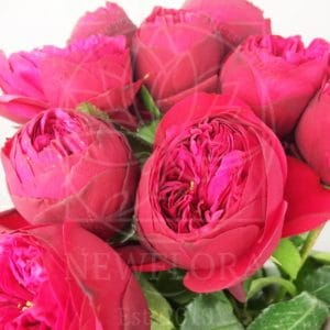 Букет 9 красных пионовидных роз Red Piano