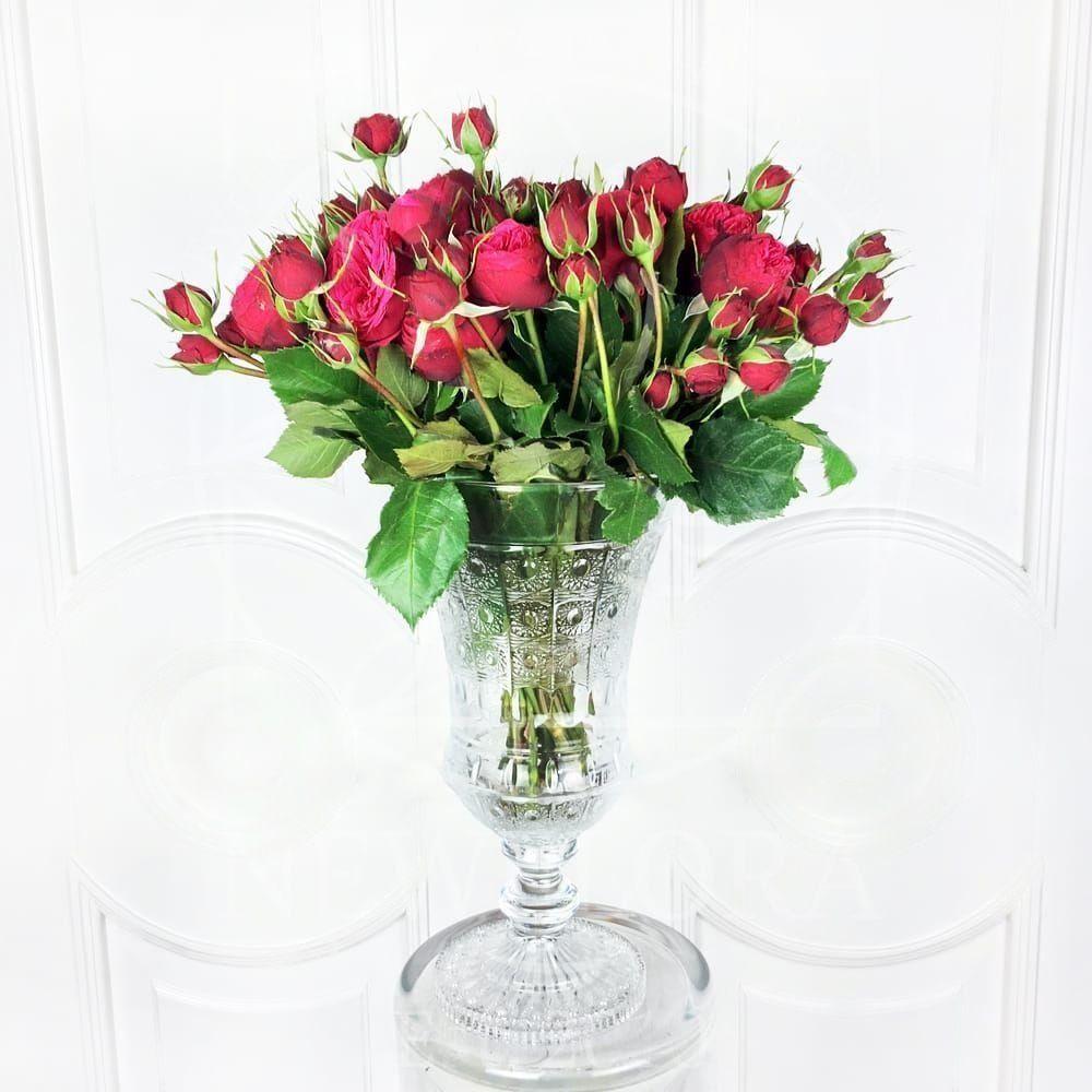 Букет 25 пионовидных роз Red Piano