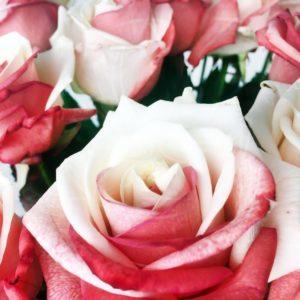 Букет 19 красно белых роз