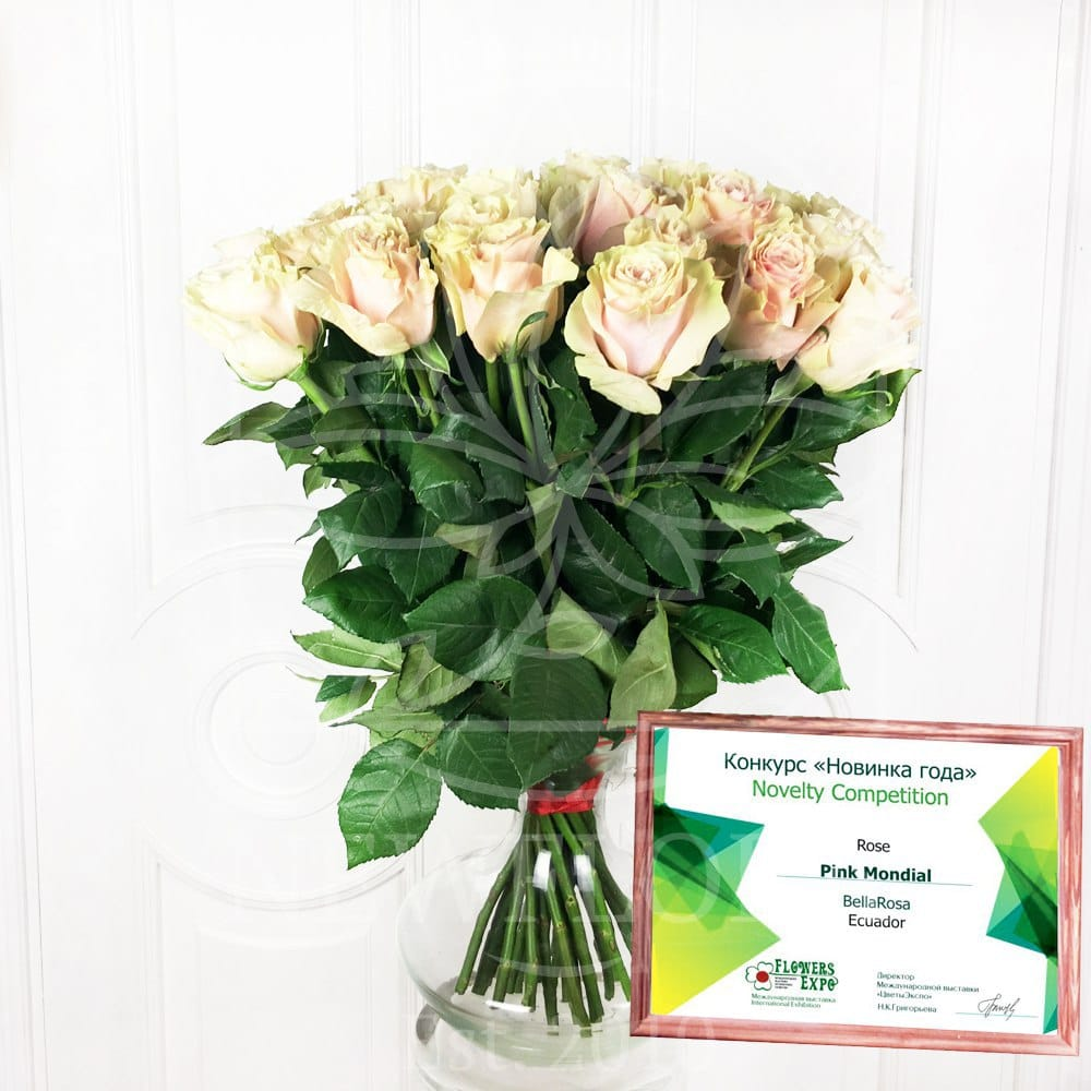 Букет 101 нежно-розовая роза Pink Mondial (Юж. Америка)