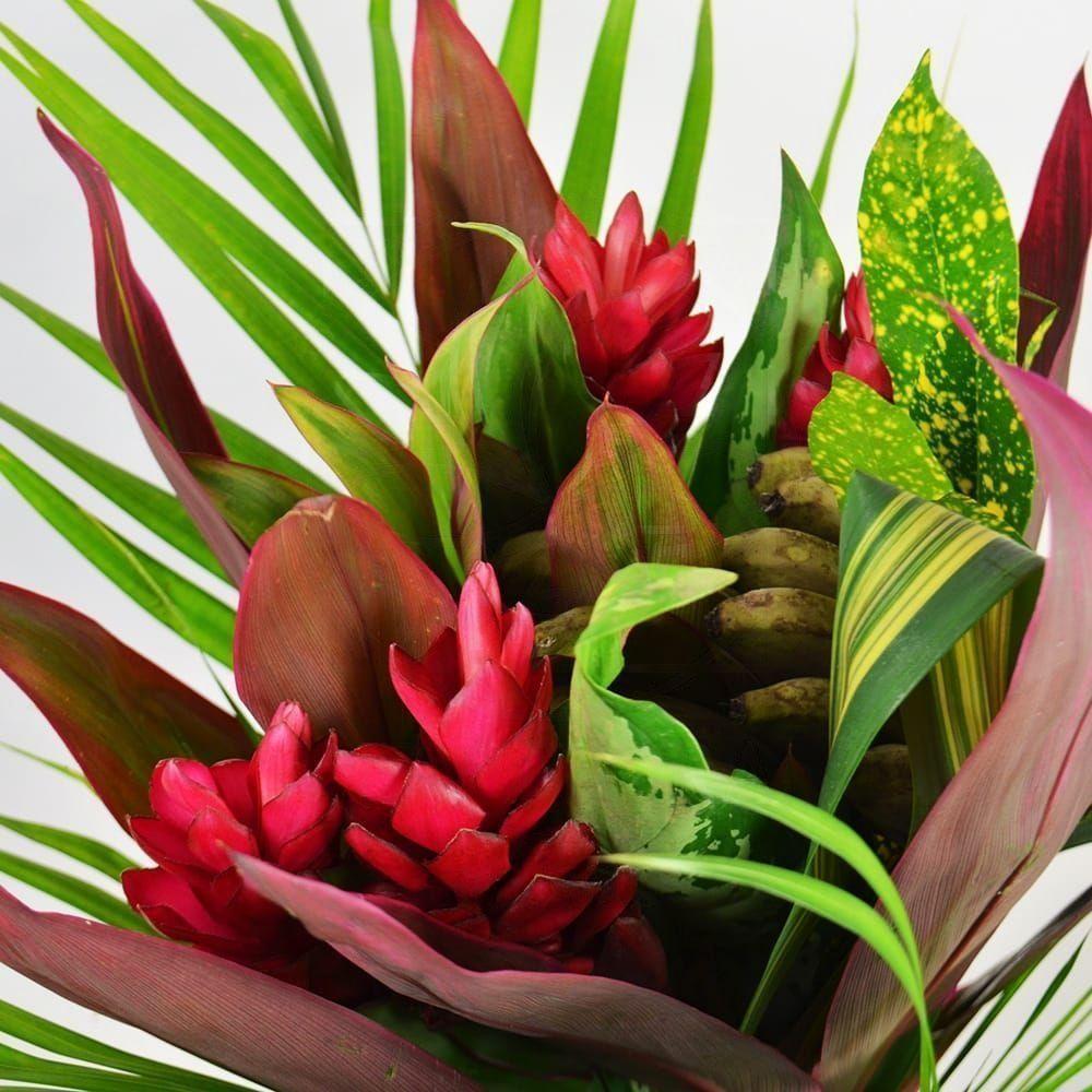 Доставка экзотических цветов нефтеюганск