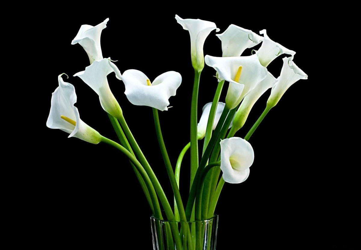 Души, открытка каллы цветы