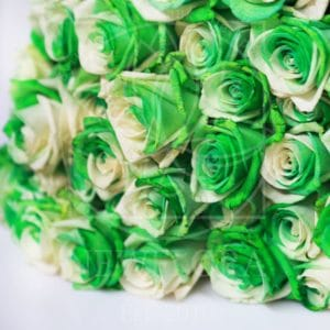 Букет 25 бело-зеленых роз