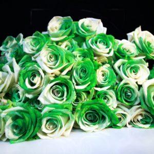 Букет 25 бело-зеленых роз (под заказ)