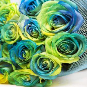 Букет 25 желто-сине-зеленых роз (под заказ)