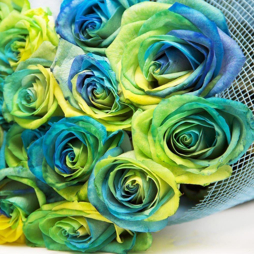Букет 25 желто-сине-зеленых роз