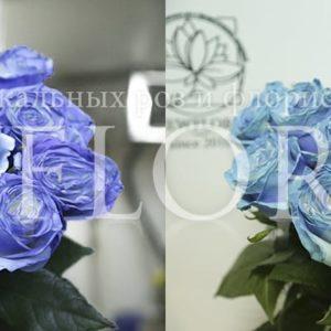 Букет 15 роз хамелеонов