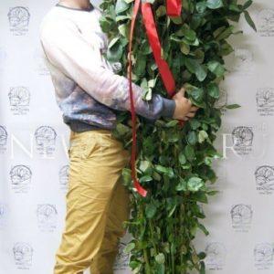 Букет 51 красная роза высотой 200см