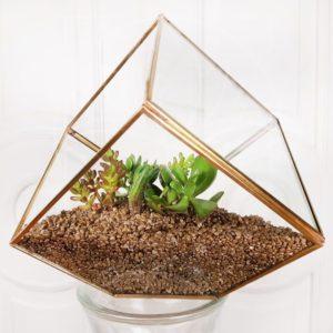 Золотой флорариум с пятью суккулентами