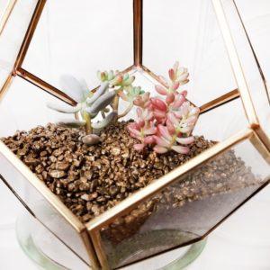 Золотой флорариум с четырьмя суккулентами