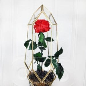 Стабилизированная роза в золотом флорариуме