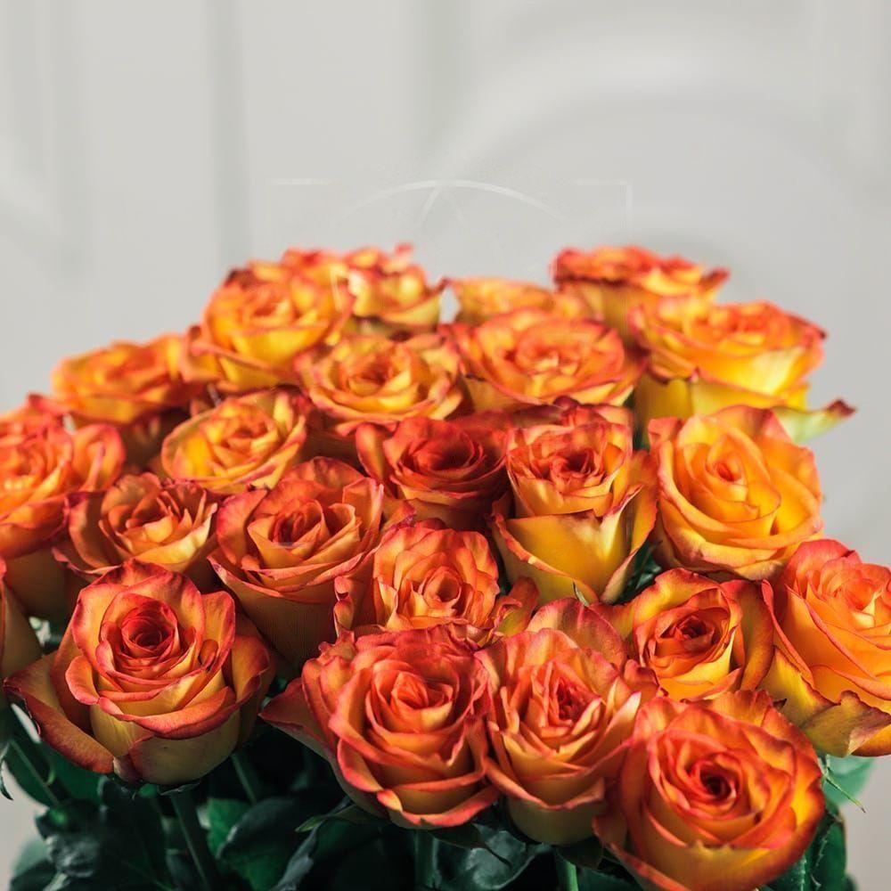 Букет 25 оранжевых роз 60см сорт Хай Меджик (High Magic)