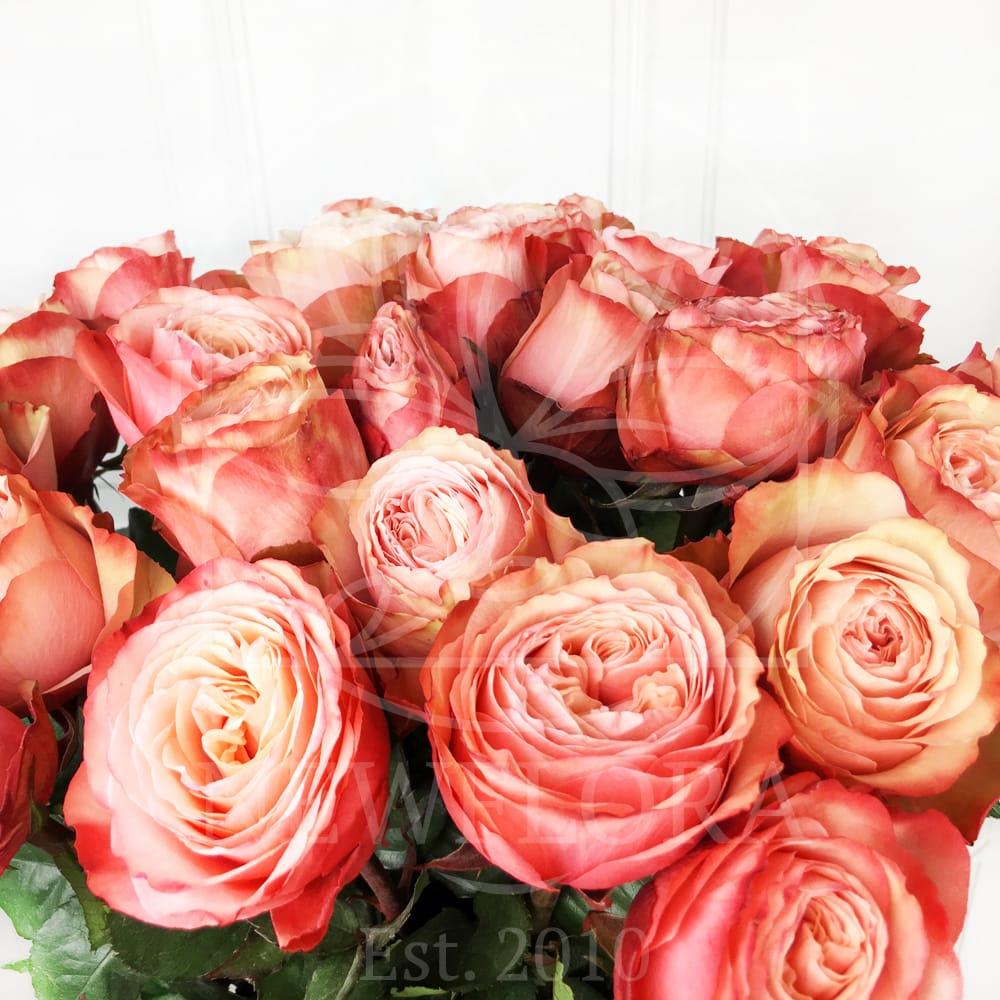 Лаванда недорогие букеты из пионовидных роз фото цветов клинцах купить