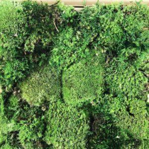 Картина из стабилизированного кочкового мха 25×30см