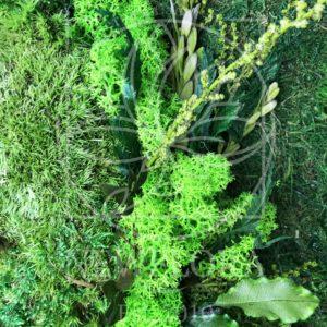 Картина из стабилизированного кочкового мха с зеленью 70×30см
