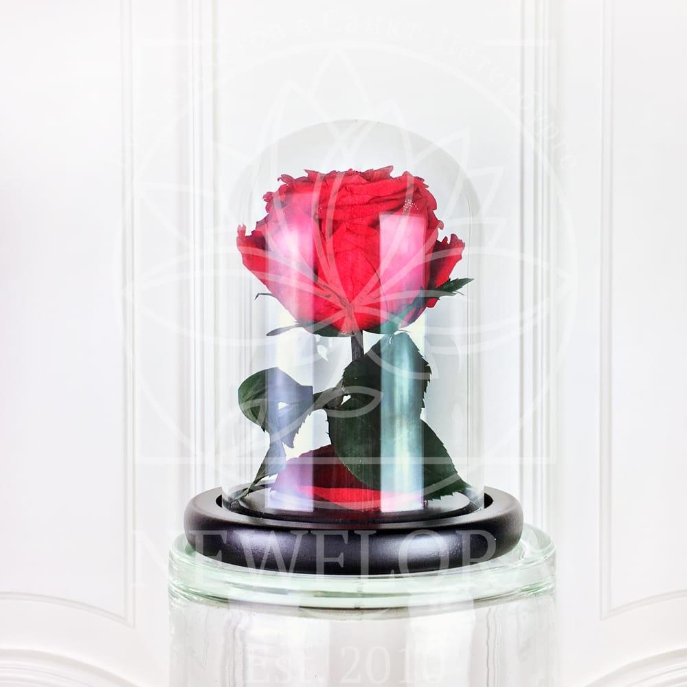 Мини роза в колбе с крупным ароматным бутоном (цвет на выбор)