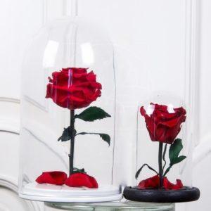 Мини роза в колбе со средним бутоном (цвет на выбор)