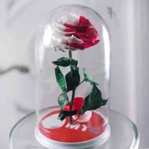 Корпоративные розы в колбе (цвет на выбор)