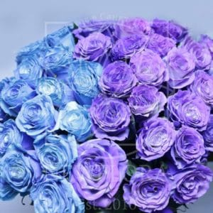 Букет 41 роза хамелеон