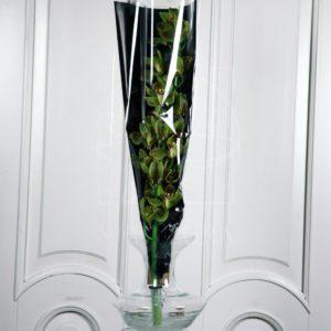 Орхидея цимбидиум оливковая (80см)