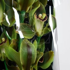 Орхидея цимбидиум оливковая