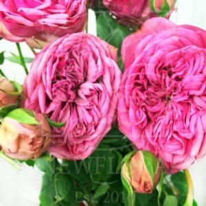Букет 9 кустовых пионовидных розовых роз Pink Piano
