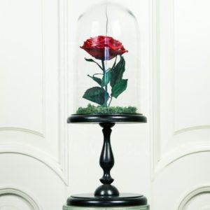 Роза в колбе на высокой подставке Маленький Принц