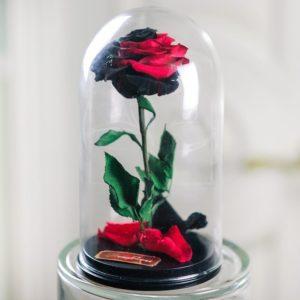 Двухцветные розы в колбе (цвет на выбор)