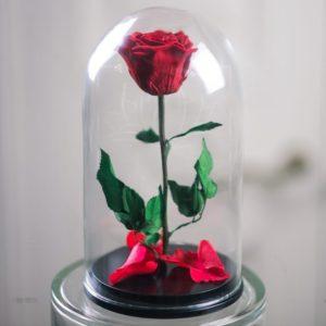 Средняя роза в колбе (цвет на выбор)