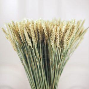 Рожь (пшеница)