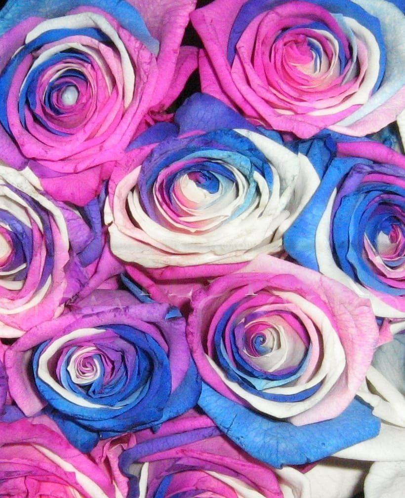 Букет 25 роз сине-бело-фиолетовых