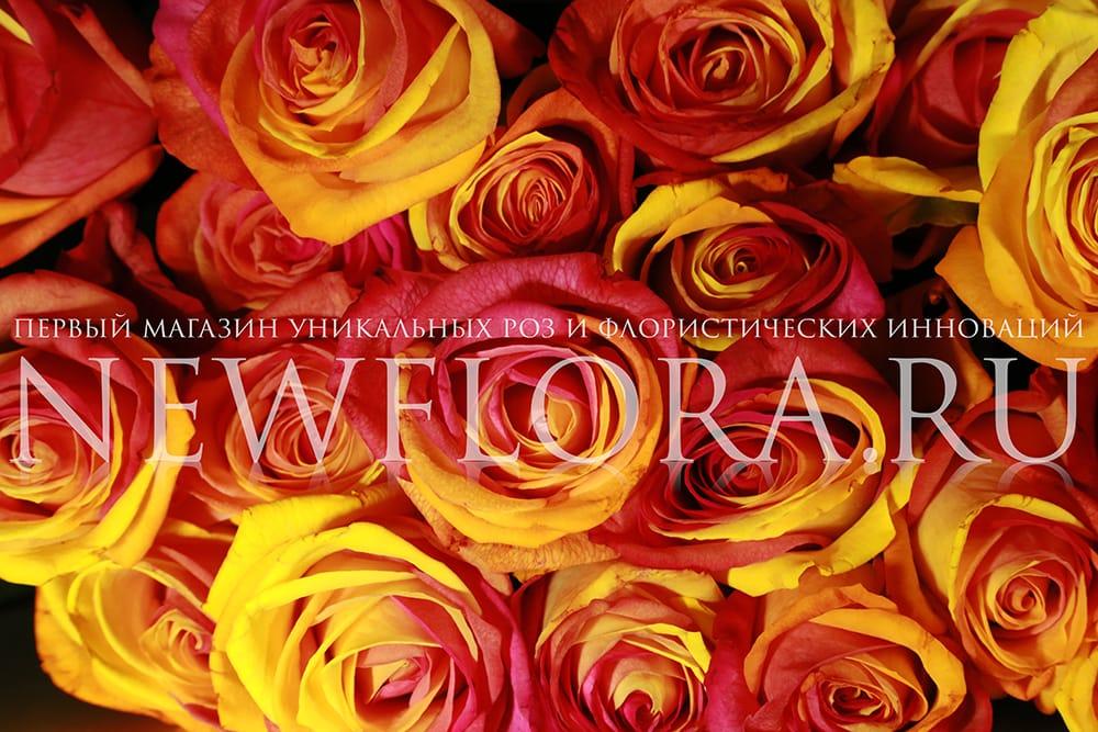 Розы красно-желтые