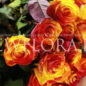 Букет 25 красно-желтых роз