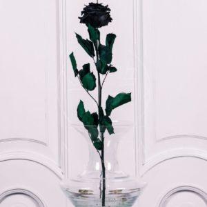 Стабилизированная черная роза
