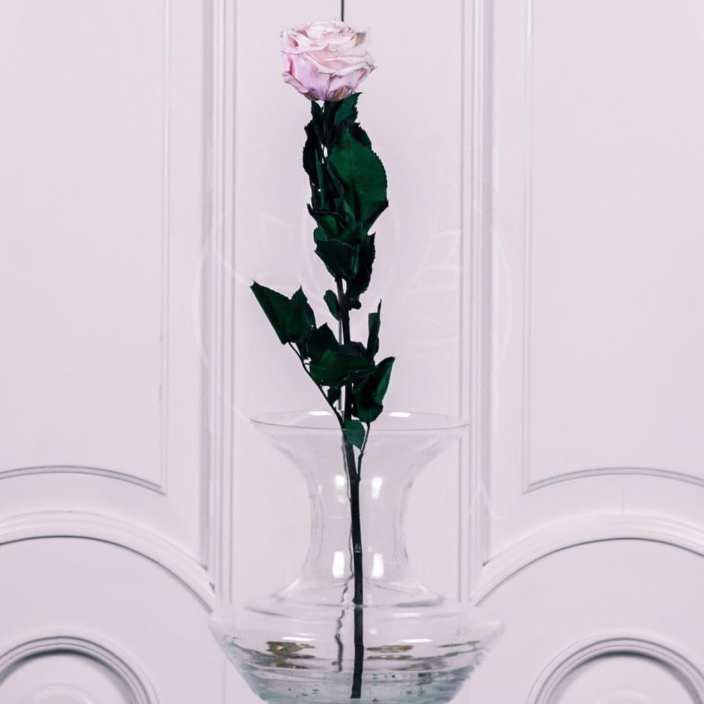 Стабилизированная белая роза