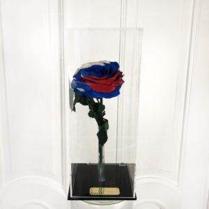 Стабилизированная роза триколор РФ в акриловой коробке