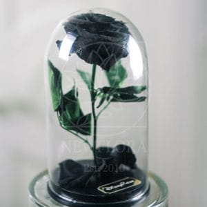Черная роза в колбе DisneyRose