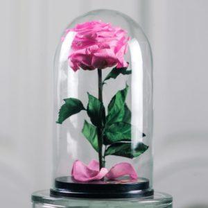 Розовая роза в колбе с ароматом (Premium)