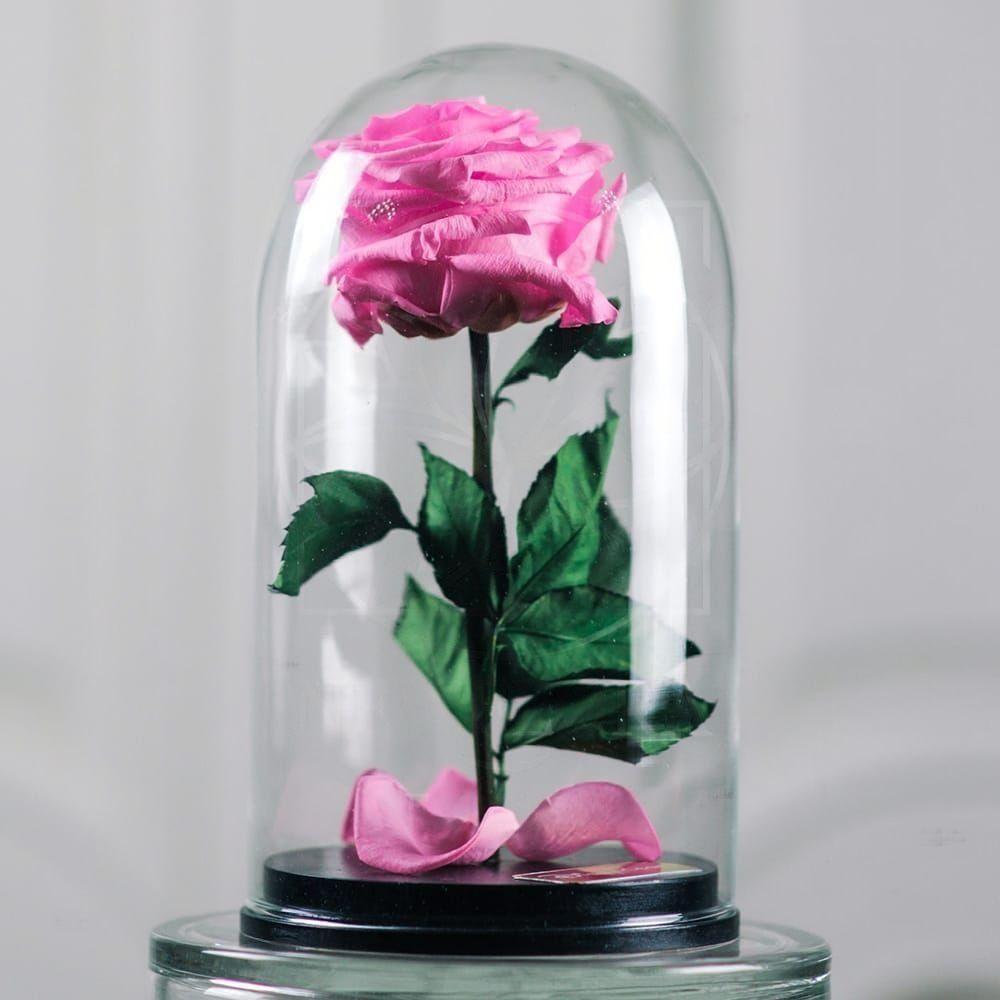 Розовая роза в колбе DisneyRose