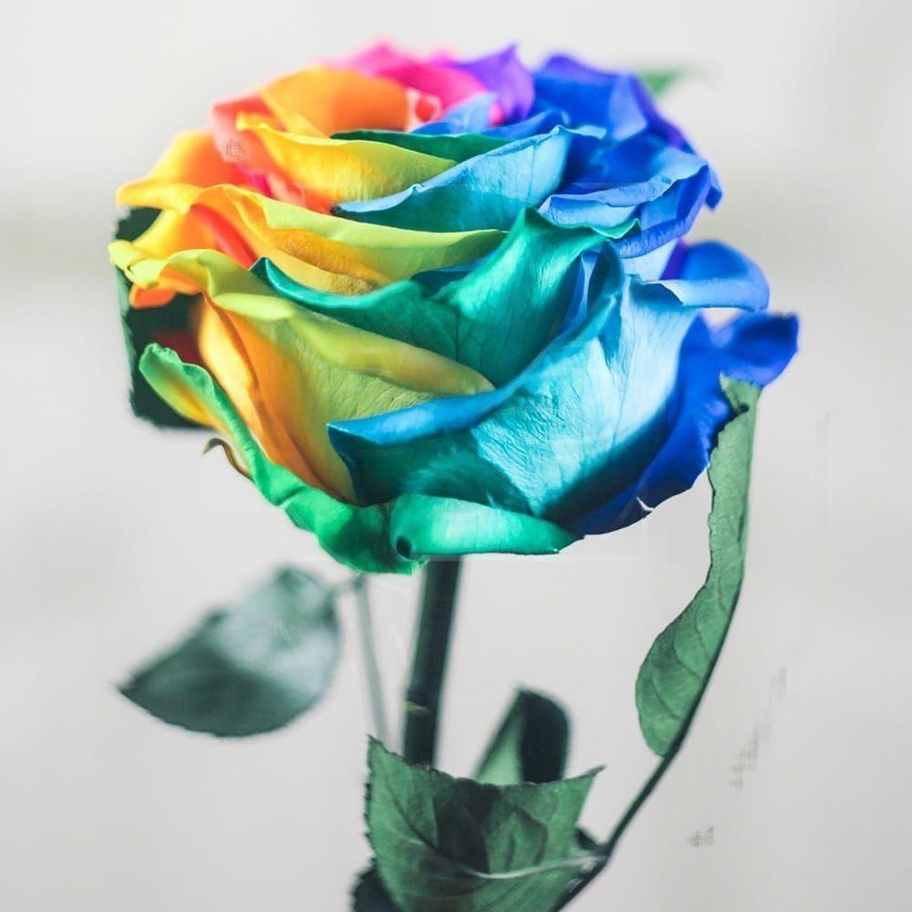 Радужная роза в колбе с ароматом (Premium)