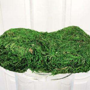 Засушенный натуральный мох