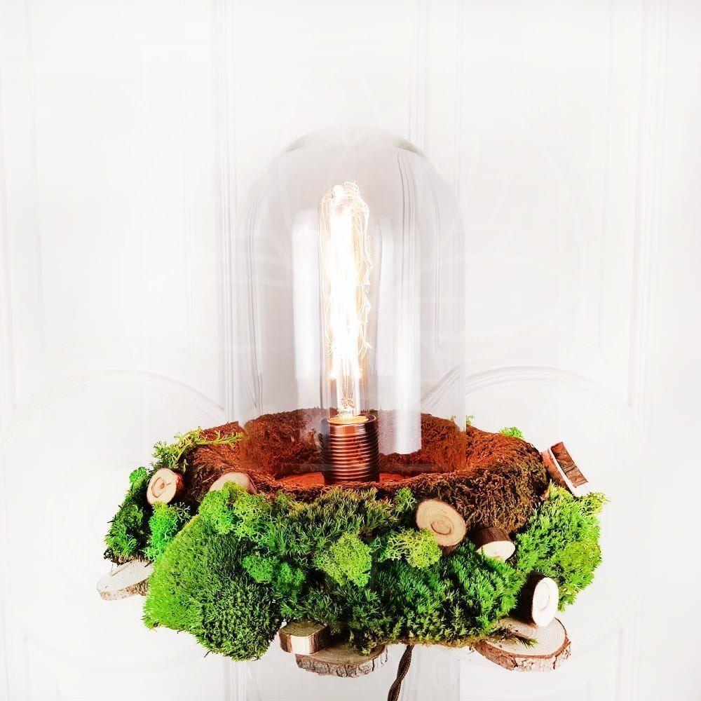 Ретро светильник лампа Эдисона в колбе со стабилизированным мхом, питание от сети