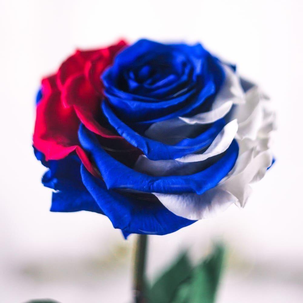 Стабилизированная роза в колбе «Триколор РФ»