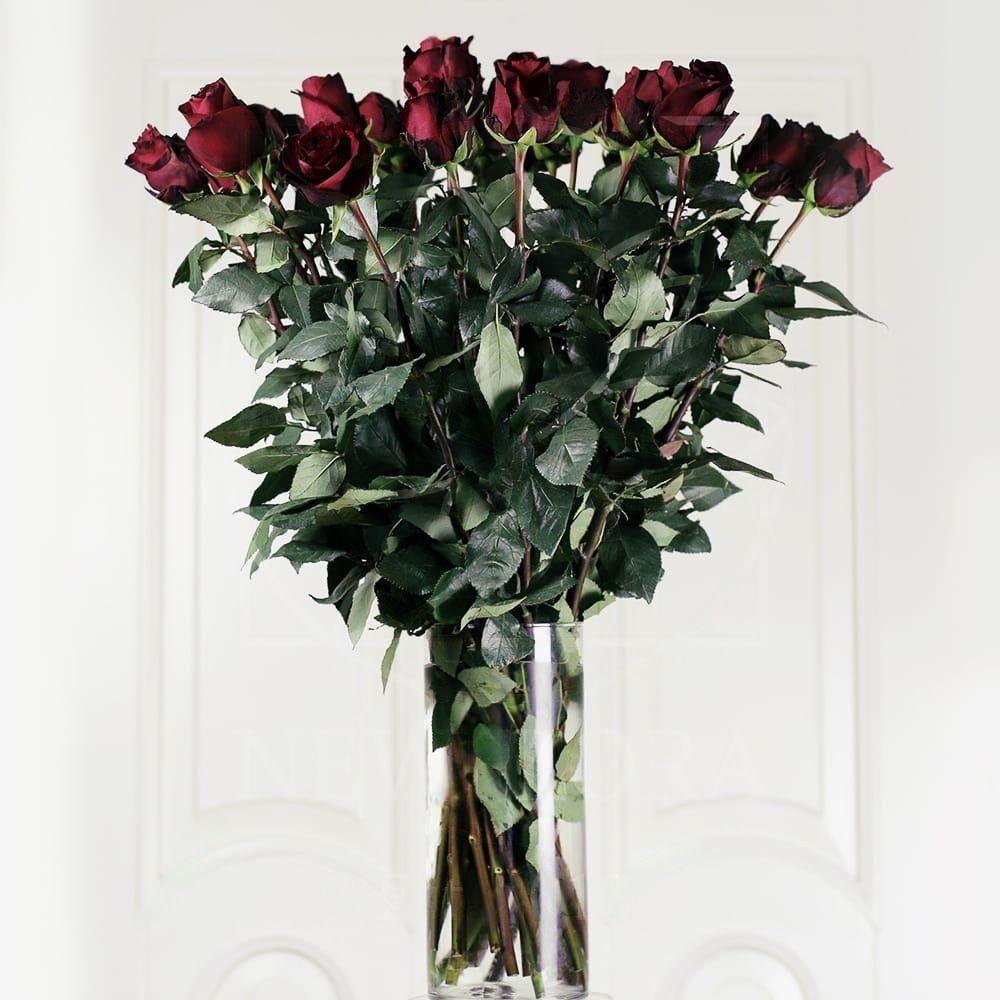 25 бордовых роз 70см сорт Explorer в вазе