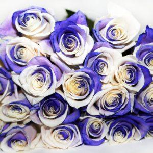 Букет 25 бело-фиолетовых роз