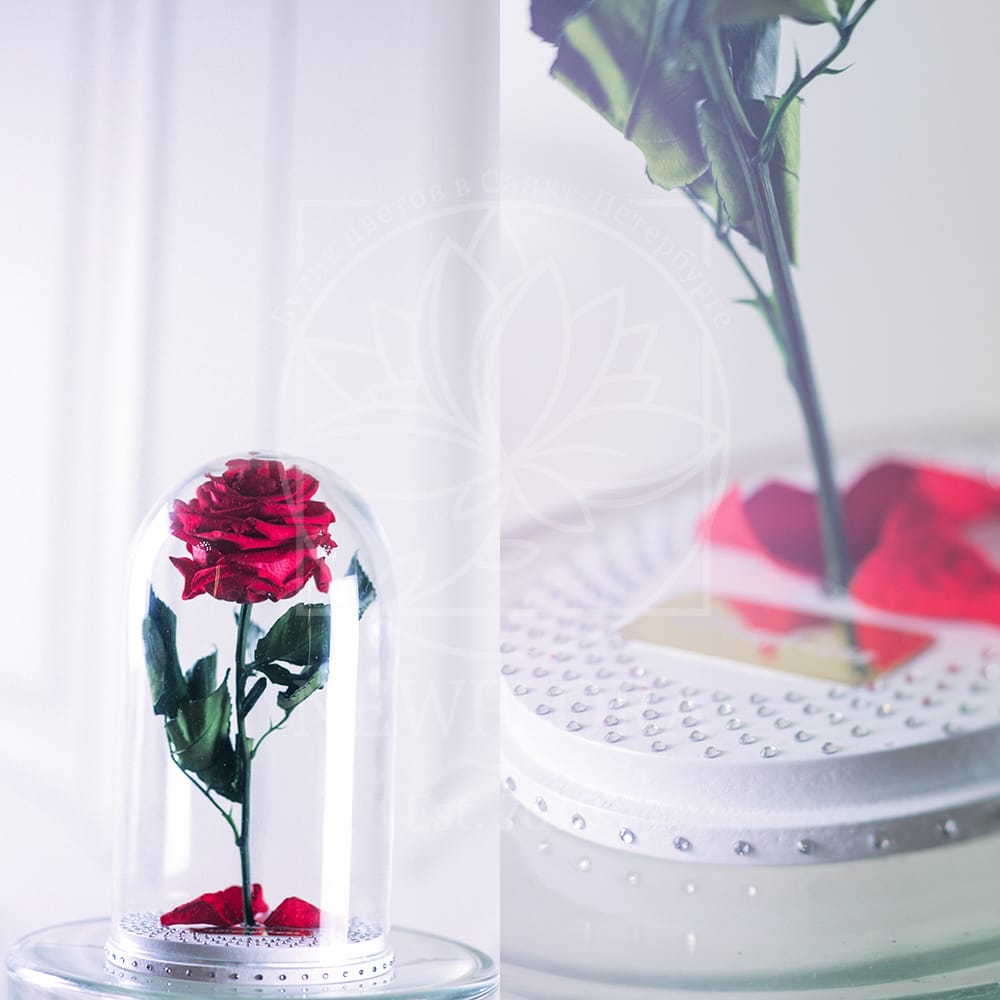 Розы в колбе DisneyRose со стразами
