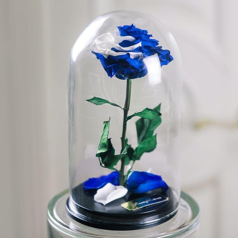 Купим цветы, стабилизированные цветы спб купить
