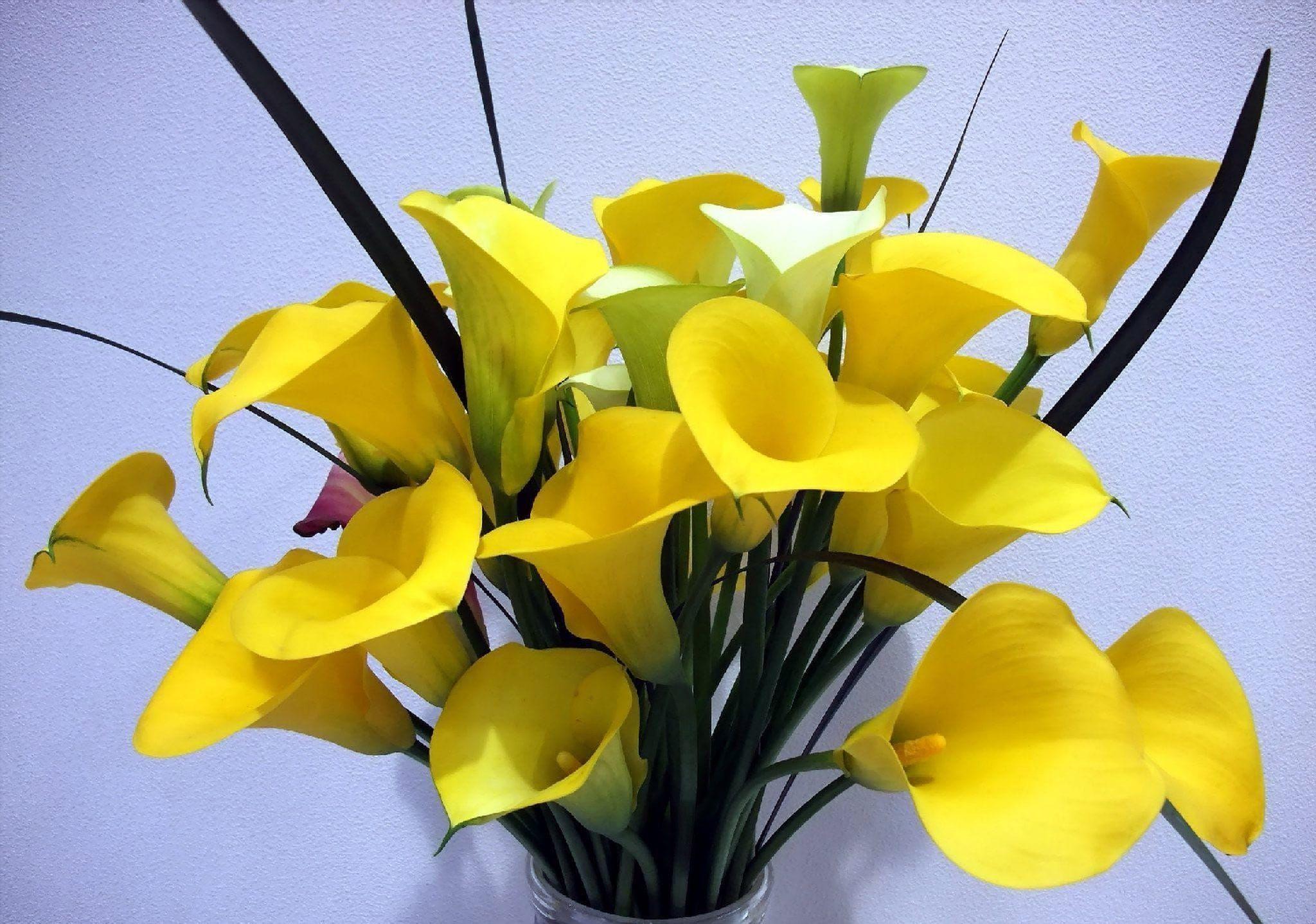 Желтые каллы поштучно