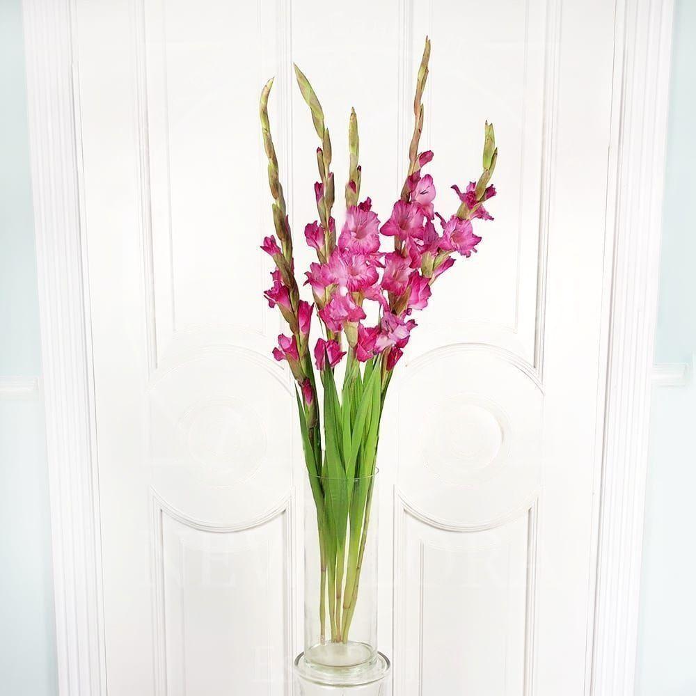Букет 5 розовых гладиолусов