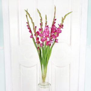 Букет 7 розовых гладиолусов